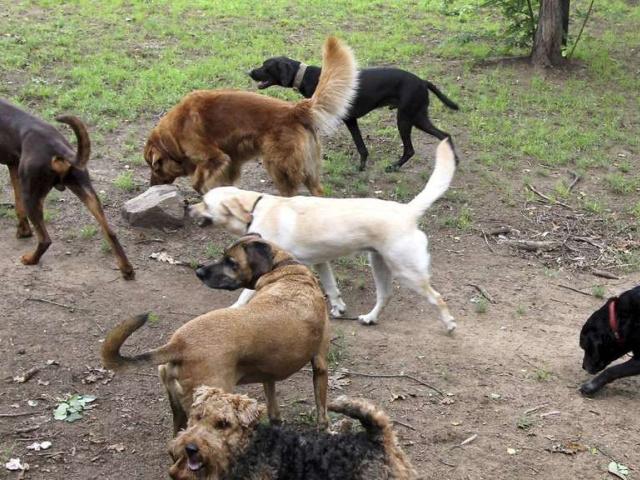 Hunde-Ranch ist Sorgen los